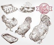 Αναπαραγωγή πουλερικών Στοκ Εικόνες