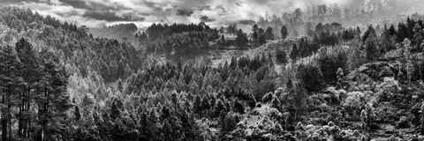 Αναπνοή που παίρνει τα δέντρα Στοκ Φωτογραφίες