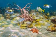 Αναπτυγμένος και ζωηρόχρωμη θαλάσσια καραϊβική θάλασσα ζωής στοκ εικόνες