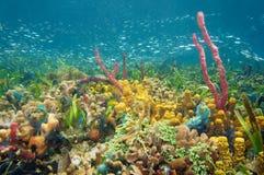 Αναπτυγμένος και ζωηρόχρωμη υποβρύχια ζωή στοκ εικόνα