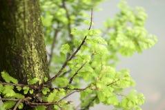Αναπτυγμένος φύλλα και κλάδοι στοκ εικόνες με δικαίωμα ελεύθερης χρήσης