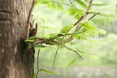 Αναπτυγμένος φύλλα και κλάδοι στοκ φωτογραφία