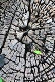 αναπτύξτε λίγο παλαιό δέντρο φυτών στοκ εικόνα με δικαίωμα ελεύθερης χρήσης