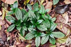 αναπτύξτε τα φυτά στοκ φωτογραφία με δικαίωμα ελεύθερης χρήσης