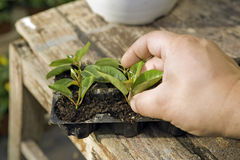 Αναπτύξτε τα φυτά Στοκ Εικόνα
