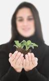 αναπτύξτε το φυτό στοκ φωτογραφία