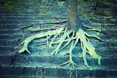αναπτύσσοντας δέντρο βράχ&omic Στοκ φωτογραφία με δικαίωμα ελεύθερης χρήσης