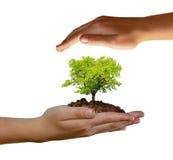 αναπτύσσοντας δέντρο χεριών Στοκ Εικόνες
