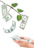 αναπτύσσοντας δέντρο χρημάτων Στοκ Εικόνες