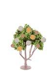 αναπτύσσοντας δέντρο χρημάτων Στοκ Φωτογραφία