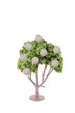 αναπτύσσοντας δέντρο χρημάτων Στοκ Φωτογραφίες