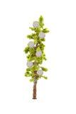 αναπτύσσοντας δέντρο χρημά&t Στοκ Εικόνες