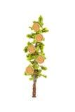 αναπτύσσοντας δέντρο χρημά&t Στοκ φωτογραφία με δικαίωμα ελεύθερης χρήσης