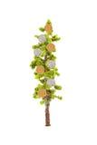 αναπτύσσοντας δέντρο χρημά&t Στοκ Φωτογραφία