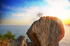 αναπτύσσοντας δέντρο Στοκ εικόνα με δικαίωμα ελεύθερης χρήσης