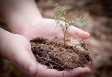 Αναπτύσσοντας δέντρο Στοκ φωτογραφίες με δικαίωμα ελεύθερης χρήσης