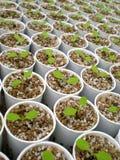 αναπτύσσοντας νέο φυτό ζωή&sig Στοκ Φωτογραφία