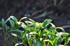 αναπτύσσοντας φυτά στοκ εικόνα