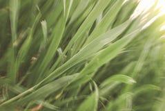 αναπτύσσοντας φυτά Στοκ Φωτογραφία