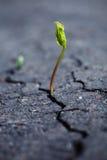 αναπτύσσοντας φυτό Στοκ εικόνες με δικαίωμα ελεύθερης χρήσης