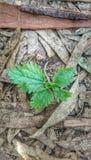 αναπτύσσοντας φυτό Στοκ Φωτογραφίες