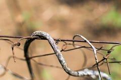 Αναρρίχηση μυρμηγκιών Στοκ φωτογραφία με δικαίωμα ελεύθερης χρήσης