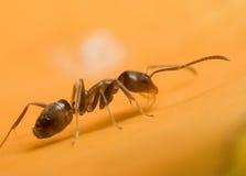 αναρρίχηση μυρμηγκιών Στοκ εικόνες με δικαίωμα ελεύθερης χρήσης