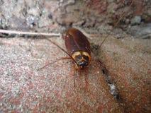 Αναρρίχηση της κατσαρίδας στοκ φωτογραφία με δικαίωμα ελεύθερης χρήσης