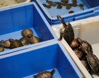 αναρρίχηση της χελώνας Στοκ Φωτογραφία