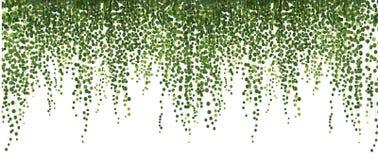 Αναρρίχηση του τοίχου του κισσού διανυσματικό λευκό καρχ έμβλημα και υπόβαθρο Ιστού στοκ εικόνα με δικαίωμα ελεύθερης χρήσης