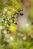 αναρρίχηση των λουλουδ&i Στοκ φωτογραφίες με δικαίωμα ελεύθερης χρήσης
