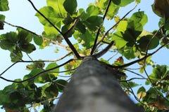 Αναρριχηθείτε στο δέντρο στοκ φωτογραφία