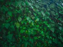 10-αναρριχητικό φυτό Στοκ φωτογραφία με δικαίωμα ελεύθερης χρήσης
