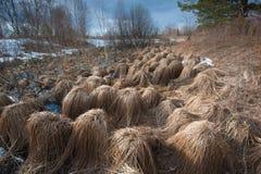 Αναρωτιέται της φύσης Στοκ Φωτογραφίες