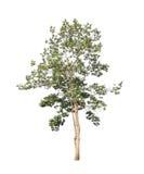 ανασκόπησης διανυσματικό λευκό δέντρων απεικόνισης απομονωμένο εικόνα Στοκ εικόνα με δικαίωμα ελεύθερης χρήσης