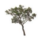 ανασκόπησης διανυσματικό λευκό δέντρων απεικόνισης απομονωμένο εικόνα Στοκ Εικόνα
