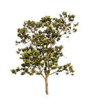 ανασκόπησης διανυσματικό λευκό δέντρων απεικόνισης απομονωμένο εικόνα Στοκ φωτογραφία με δικαίωμα ελεύθερης χρήσης