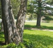 ανασκόπησης κόκκινο δέντρο αχλαδιών αχλαδιών φυλλώματος πράσινο Στοκ εικόνα με δικαίωμα ελεύθερης χρήσης