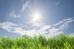 ανασκόπησης μπλε διάνυσμα ουρανού απεικόνισης χλόης πράσινο Στοκ φωτογραφίες με δικαίωμα ελεύθερης χρήσης