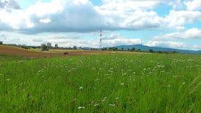 ανασκόπησης πράσινο διάνυσμα φύσης τοπίων σύγχρονο απόθεμα βίντεο