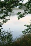 ανασκόπησης δροσοσκέπαστο φυλλώματος λευκό φύλλων πλαισίων πράσινο Στοκ Φωτογραφία