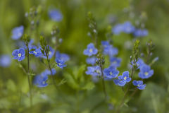 ανασκόπησης όμορφο φως απεικόνισης λουλουδιών δασικό Στοκ Εικόνες