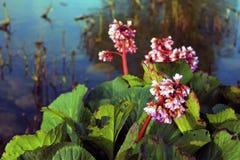 ανασκόπησης όμορφο φως απεικόνισης λουλουδιών δασικό Στοκ Φωτογραφίες