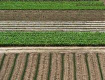 ανασκόπηση γεωργίας στοκ εικόνες