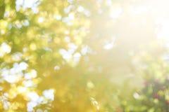 ανασκόπηση ηλιόλουστη Φύλλα Φύση ήλιος κίτρινος Πράσινος Στοκ Εικόνα