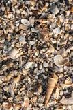 Ανασκόπηση θαλασσινών κοχυλιών Στοκ Εικόνα