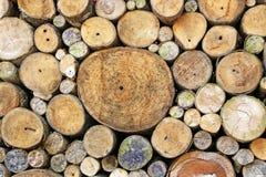 Ανασκόπηση κολοβωμάτων δέντρων Στοκ Εικόνα