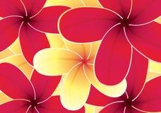 Ανασκόπηση λουλουδιών Frangipani Στοκ Εικόνα