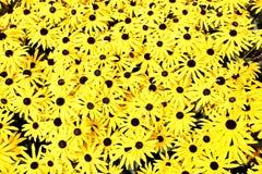 Ανασκόπηση λουλουδιών Στοκ Φωτογραφίες