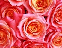 Ανασκόπηση με τα τριαντάφυλλα στοκ φωτογραφία